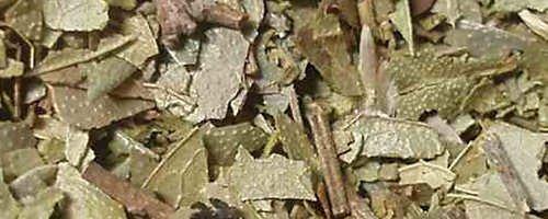 Folia (Blätter)